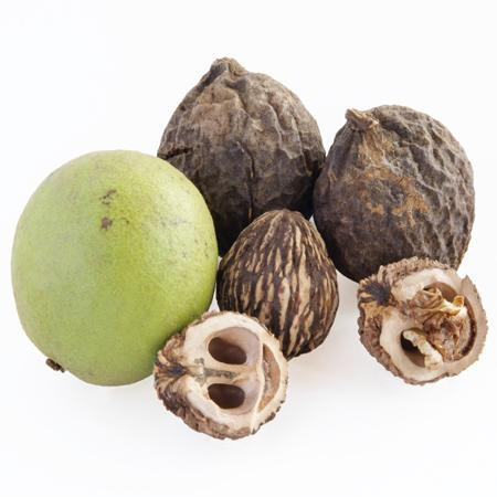 Walnut husk, nut, and meat