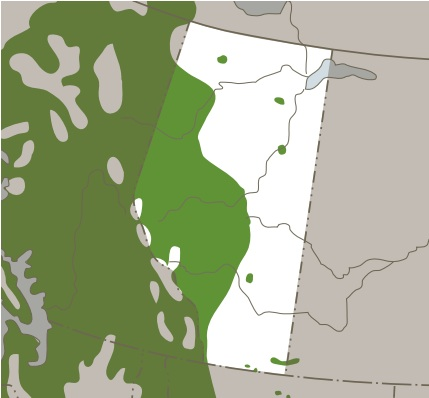 Lodgepole Pine Distribution